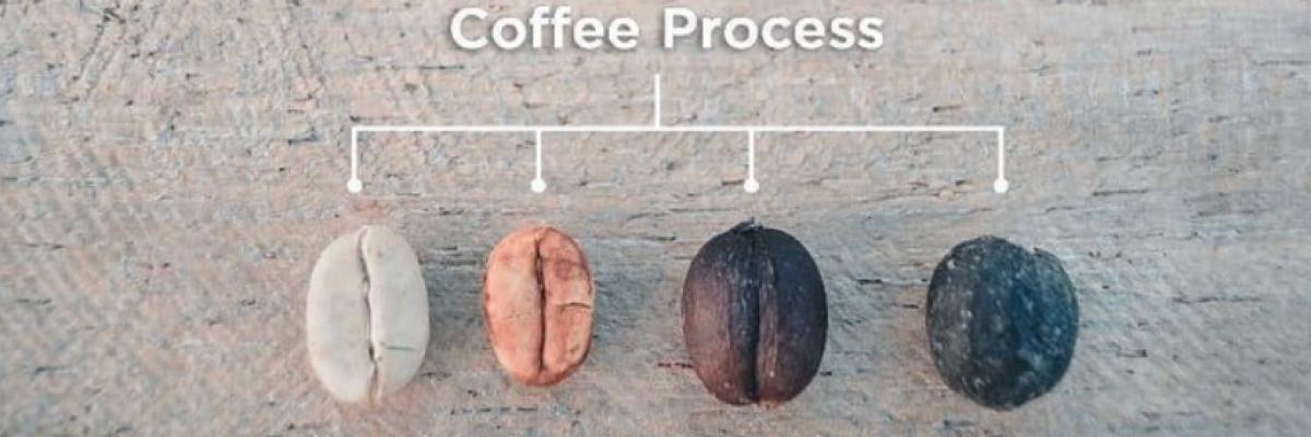 coffee process2